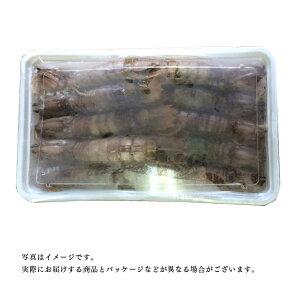 【送料無料】小樽高島プレミアムシャコ特大20尾メス子持ち業務用にもシャコしゃこガサエビ北海道産小樽産お刺身お寿司