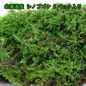 【送料無料】北海道産 シノブゴケ 2パック入り