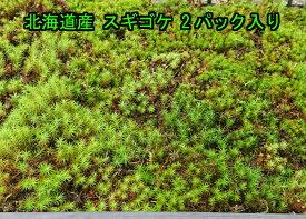 【送料無料】北海道産 スギゴケ 2パック入り