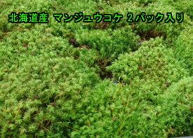 【送料無料】北海道産 マンジュウコケ 2パック入り