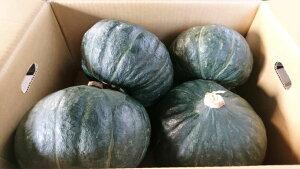 【北海道産】かぼちゃ ジェジェJ 10kg(4〜5玉)