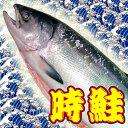 時鮭 3.8kg位