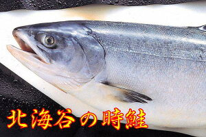 時鮭 まるごと切らずに1本そのまま 2.8kg位