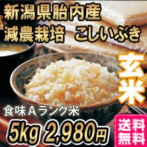 新米 平成29年産 新潟産こしいぶき 5kg 玄米 【送料無料】食味Aランク (ほぼ 無農薬) 一等級