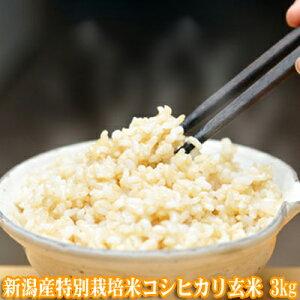 新米 令和2年産 新潟産特別栽培米コシヒカリ 玄米 3kg【玄米 送料無料】(玄米 新潟産)ほぼ無農薬 一等米