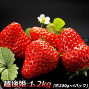 新潟産 越後姫 大粒イチゴ ご家庭用のわけあり 約300gのパックが4パックの1.2kg!!【母の日 ギフト】