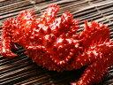 「蟹の匠」茹で上げ!花咲ガニ1kg前後(急速冷凍)