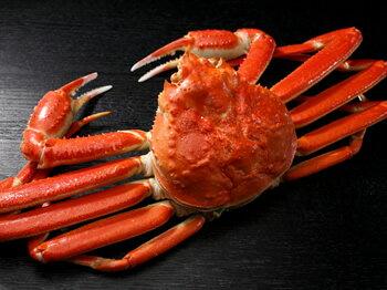 「蟹の匠」茹で上げ!本ずわいがに
