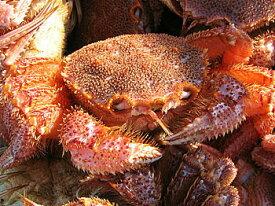 【送料無料】「蟹の匠」厳選!極上「活」毛ガニ中サイズ4尾で1.8kg前後入【A】