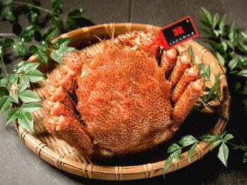 選りすぐった最高品質の毛ガニの証として、北釧水産タグを付けています。