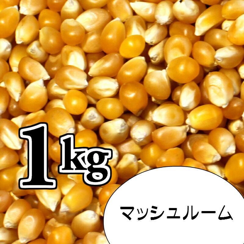 ポップコーン豆1kg【マッシュルーム種】