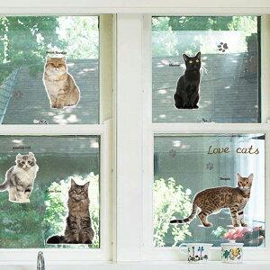 ウォールステッカー ネコちゃんいっぱい北欧 ウォールステッカー 壁面 シール 実写 猫  動物 壁紙 トリックアート だまし絵 シール 壁画 キッズ 保育園 ベビールーム 装飾 ステ