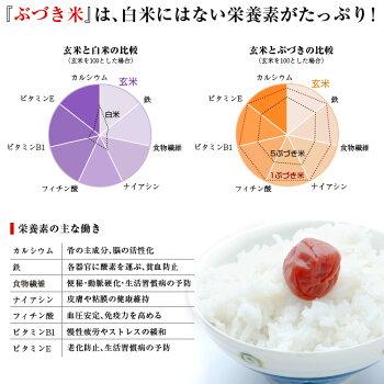 【特別セール】精米機タイワ製精米機MAIKO〔まいこ〕PL-0315段階で調整可能栄養価の多い分づき米にも最適