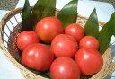 EM農法 無農薬完熟 トマト[9〜11個 約1.2kg前後][無農薬、トマト、とまと、EM菌]