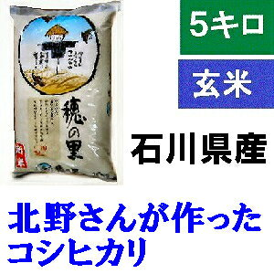 「北野さんのこしひかり」玄米 5kg・令和元年産 新米 コシヒカリ・石川県産