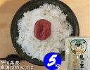 お米 5kg 【送料無料】 新米 令和元年産 石川県産「加賀厳選米 ゆめみづほ」白米 玄米 5分づき精米 無洗米 からお選びください。