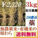 【送料無料】《稲わら》「無農薬米・有機栽培米 の稲藁「わら」3kg「約10束」石川県産」[稲わら、稲藁、稲ワラ、わら、藁、籾殻、もみ殻、等販売]「無農薬」