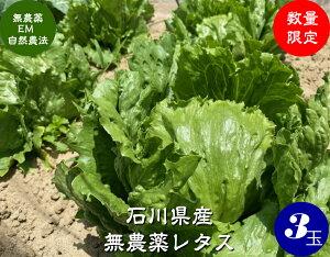 送料無料 EM自然農法 無農薬栽培 ミニレタス 3個[無農薬/野菜/レタス]
