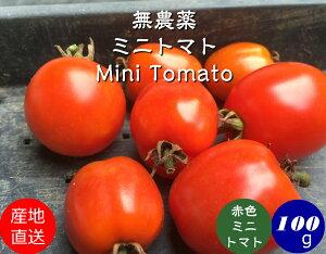 無農薬 ミニトマト【赤色】 約100g[無農薬/薄皮ミニ トマトピンキー/無農薬栽培/トマト/Mini Tomato red]
