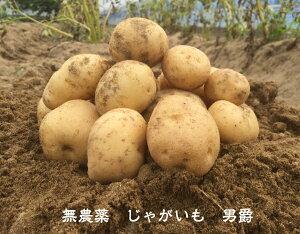 送料無料 無農薬 野菜 じゃがいも[男爵]1kg EM農法 土・泥付き[無農薬、EM菌、ジャガイモ]
