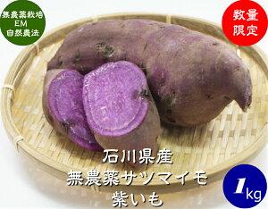 送料無料 無農薬 EM農法 わけあり 紫いも(さつまいも)1袋1kg【無農薬 さつまいも 紫芋 国産 石川県産・EM菌】