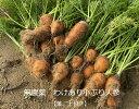 無農薬 EM農法 わけあり 人参 小ぶり 葉っぱ付き泥付き(にんじん)1袋 1kg【無農薬・有機 人参・にんじん・ニンジン…