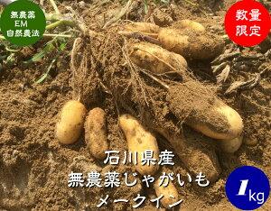 送料無料 無農薬 野菜 じゃがいも[メイクイーン]1kg EM農法 [無農薬、EM菌、ジャガイモ]土付き 泥付き
