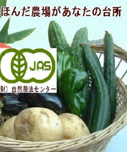 送料無料 有機栽培・キュウリ《JAS》3本入[無農薬/有機/きゅうり]