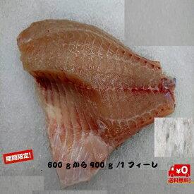養殖真鯛3枚卸腹骨取り マダイ 鯛 1枚約600gから900g鹿児島県産 送料無料 チルド 忘年会 新年会 贅沢 グルメ お取り寄せ お試し おかず セット 刺身 北海道、沖縄は1000円加算し、ご請求いたします。