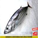 期間限定クーポン対象商品 10月31日(日)納品まで カツオ 鰹 ミシュランのお店でもご使用 1本釣り 1匹約1.5kgから…