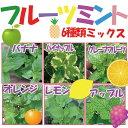 【当店農場生産】フルーツミント6種類セット 6鉢セットのお買い得セット♪