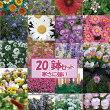 【20セット限定福袋】送料無料!春に花が咲く♪季節のお花の苗20ポットセット☆