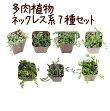 【当店農場生産】多肉植物ネックレス系7種セット