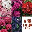 【10鉢セット】変わり咲きペチュニア5種類×2苗セット(花なし苗)毎年咲く強いペチュニア!