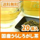 ● 国産 うらじろがし茶 3g x 20p ( ティーバッグ )< ノンカフェイン > 送料無料 /セ/