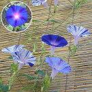 江戸風情10個・江戸風情単色青紫5個セット