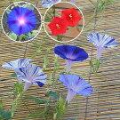 江戸風情5個・江戸風情単色青紫5個・るこう草5個セット