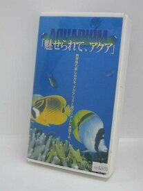 H1 03413 【中古・VHSビデオ】「AQUARIUM「魅せられて、アクア」」