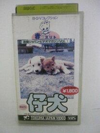 H5 09225【中古・VHSビデオ】「赤ちゃんストリートVol.1仔犬」