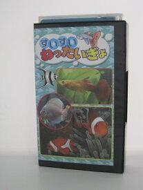 H5 11238【中古・VHSビデオ】「すいすいねったいぎょ」熱帯魚 学習ビデオ