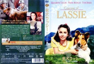 灵犬莱西 [字幕] 勇气 | 预 DVD