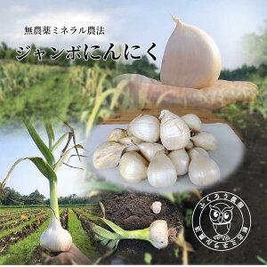 ふくろう農園/無農薬ミネラル農法で育ったジャンボにんにく/1kg/大小混ざり約18〜25片/大蒜/ジャンボにんにく