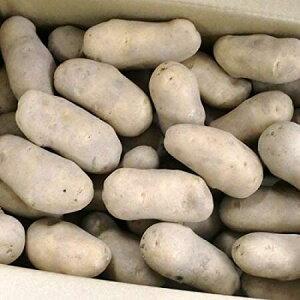 じゃがいも 北海道 メークイン 北海道産 じゃがいも メークイン Lサイズ 10kg ジャガイモ 北海道 送料無料