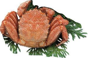 送料無料 毛蟹 ギフト 「毛ガニ 大 1尾 約400g」 ギフト カニ 蟹 かに 毛蟹 毛がに けがに 毛ガニ 海鮮 海産物 冷凍 北海道
