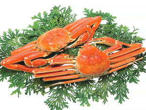 送料無料 ずわいがに 姿 蟹 ギフト 「ズワイガニ姿 2尾 約1kg」 ギフト カニ 蟹 かに ずわいがに ずわい蟹 ズワイ蟹 ズワイガニ 海鮮 海産物 冷凍 北海道