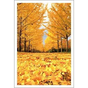 ● 秋深し!銀杏並木 「 アラカルト・ポストカードのみ」 絵はがき・ポストカード 【メール便OK】