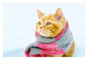 ● 冬の追憶 絵はがき・ポストカード 【メール便OK】