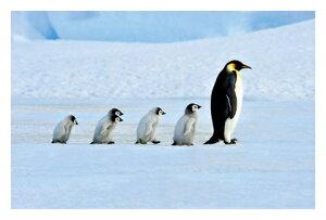 ● ペンギンのあったかファミリー! 絵はがき・ポストカード 【メール便OK】