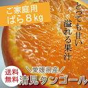 【送料無料】 冷蔵発送 【ノーワックス・防腐剤不使用】愛媛県産【清見タンゴール】オレンジ みかん【サイズばら8キロ…