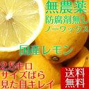 ポイント5倍【送料無料】 【愛媛県大三島産】無農薬レモン【サイズバラ2.5キロ】 国産レモン 訳あり ワケあり わけあ…